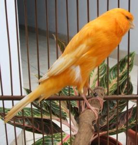 raja burung khayalan